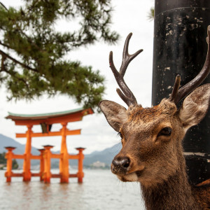 Things to do in Miyajima