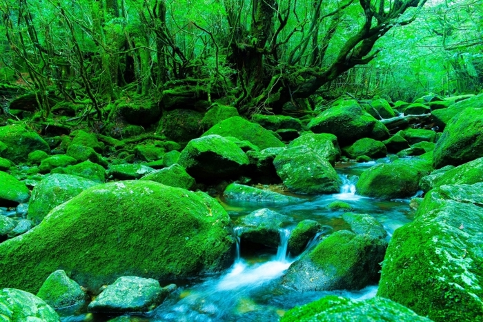Things to do in Yakushima