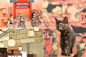 Historic Style Cat Cafe
