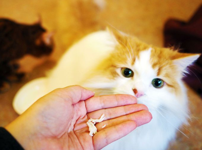 Instagram Worthy Animal Cafes in Tokyo (Part 4)