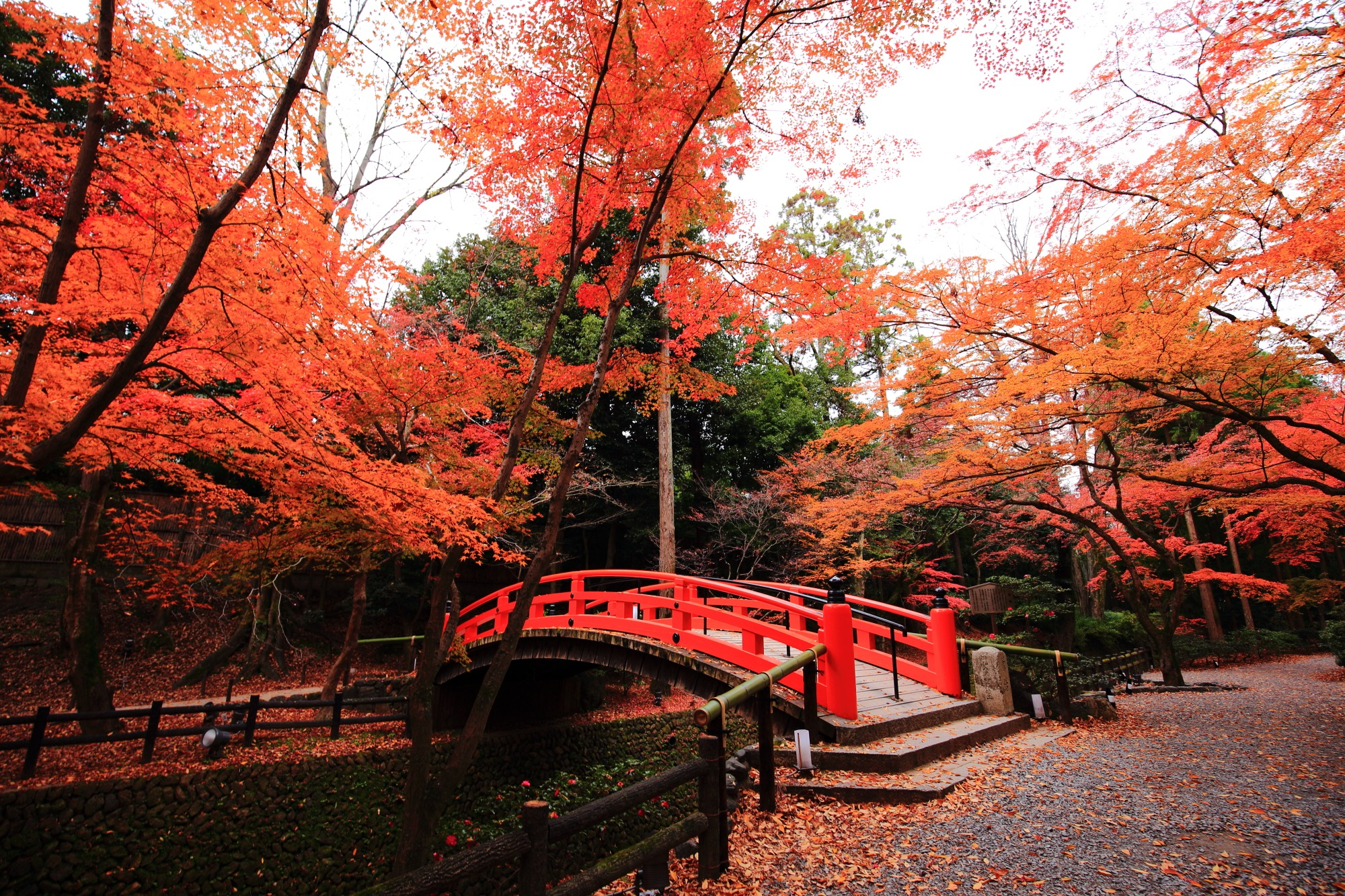 Autumn Scenery in Kyoto