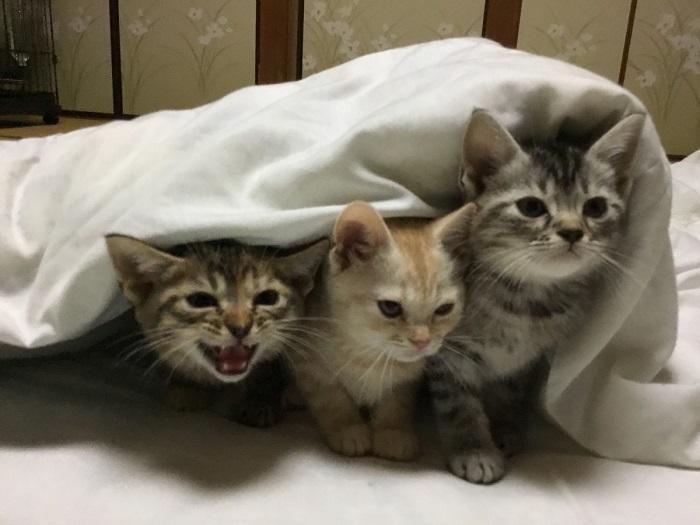 Rent a cat at a Ryokan