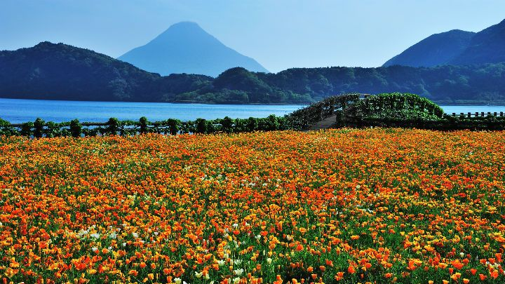 Spring in Japan (Part 4)