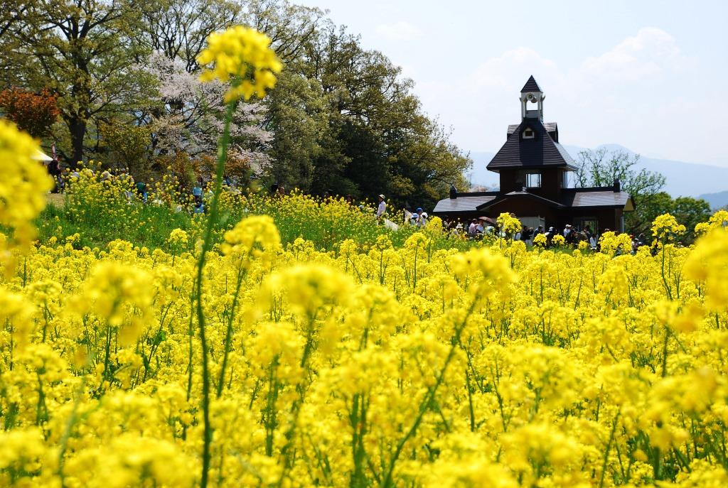 Spring in Japan (Part 3)